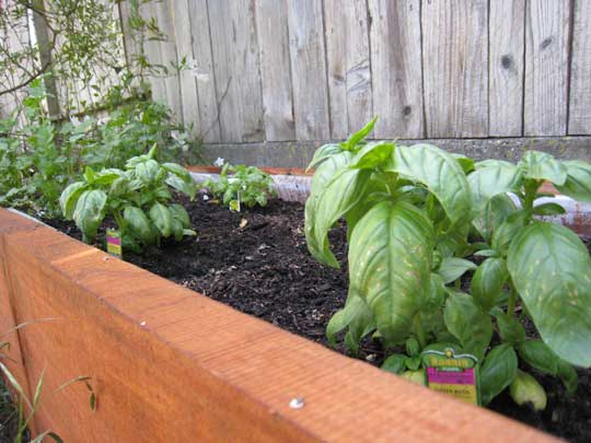 Garden---Herbs